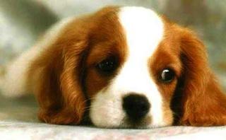 sad-puppy-320x198
