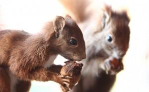 squirrels-580x358